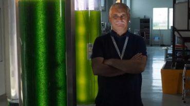 Una foresta liquida di microalghe per combattere la CO2 di Porto Marghera