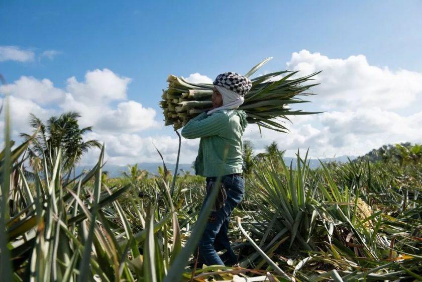 Piñatex, il tessuto vegetale che nasce dagli scarti dell'ananas