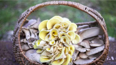 Nella Circular Farm funghi e ortaggi si producono con i fondi di caffè